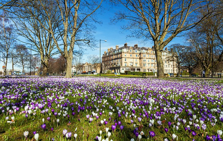 Harrogate: Britain's Floral Resort