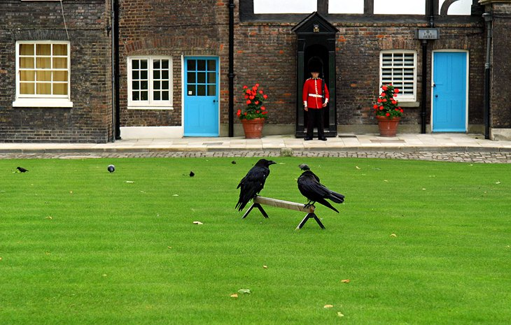 Tower of London Ravens