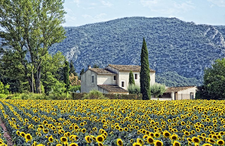 The Charming Countryside of Provence