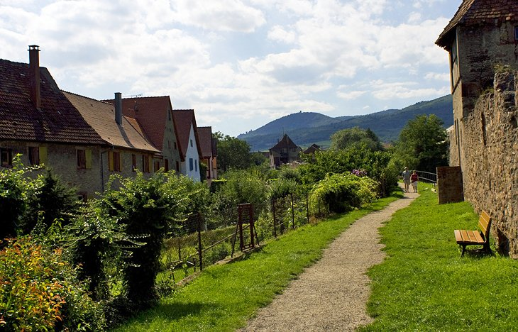 Paths through Rolling Hills to Picturesque Alsatian Villages