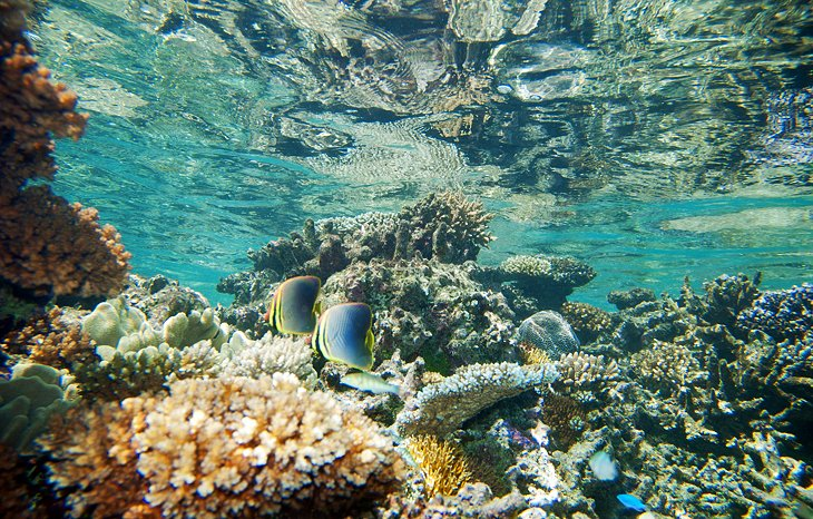 Snorkeling, Wakaya Island