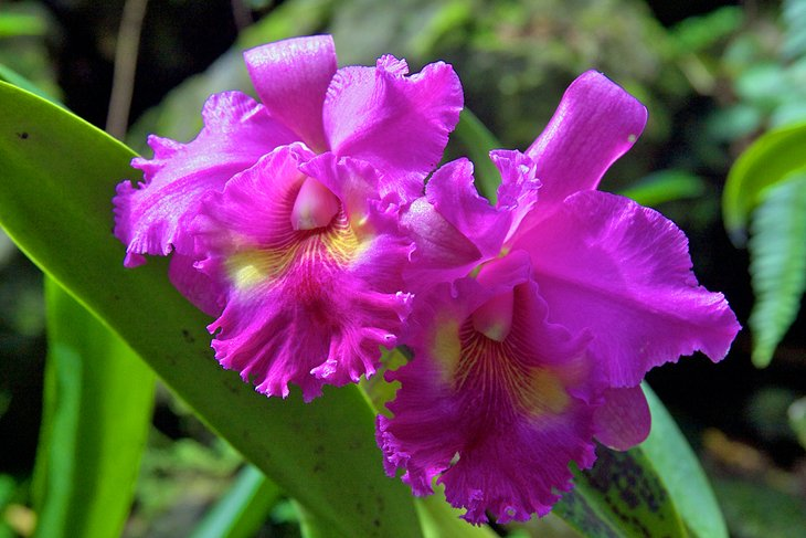 Orchid in the Garden of the Sleeping Giant