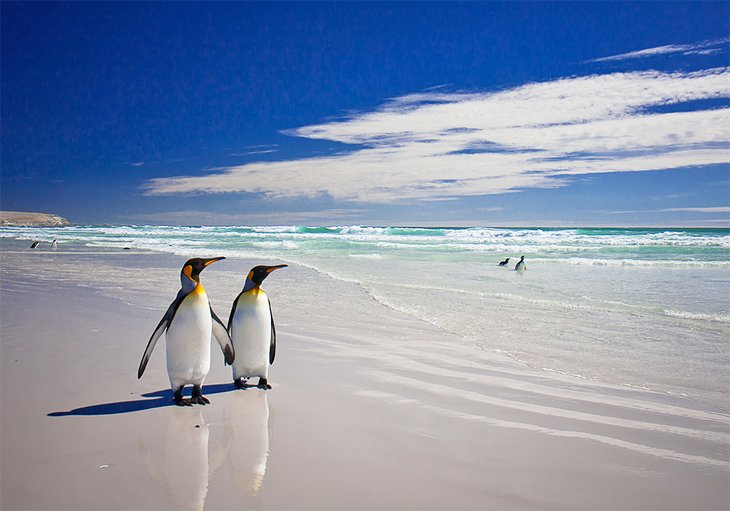 Falkland Islands Map, The Penguins Of Volunteer Point, Falkland Islands Map