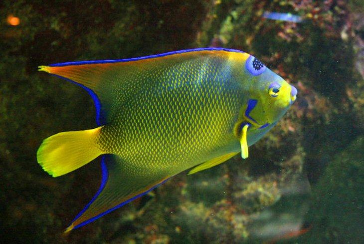 Aquarium de la Guadeloupe Arcadius