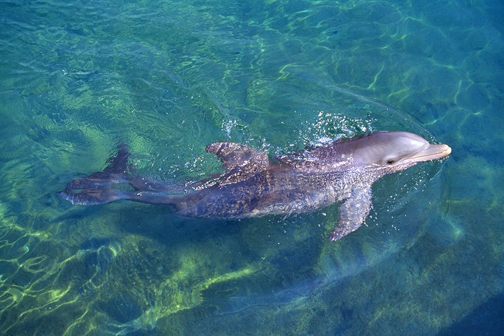 ملاقات دلفین، موسسه Roatán علوم دریایی