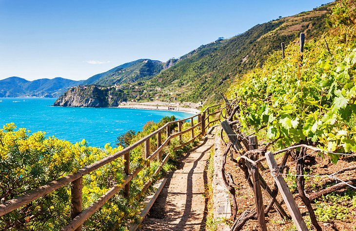 11 top things to do in italy planetware cinque terre trail sciox Gallery