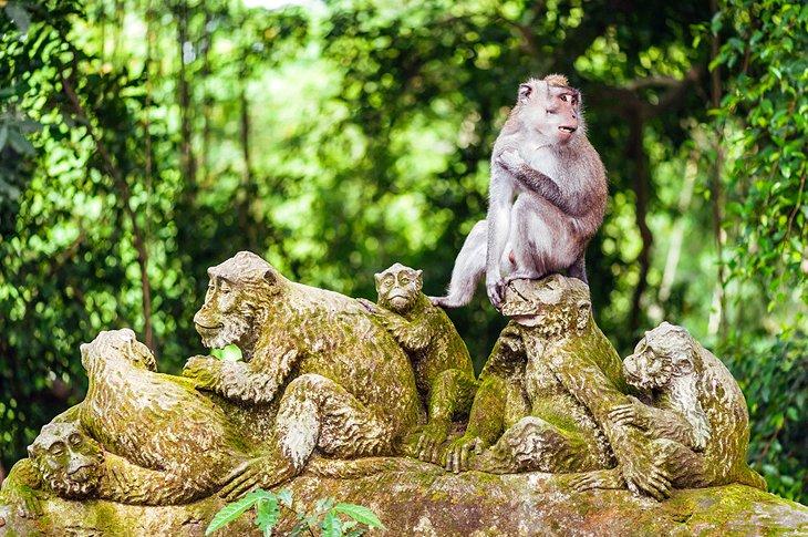 غابة القرود من المزارات السياحية في بالي، إندونيسيا
