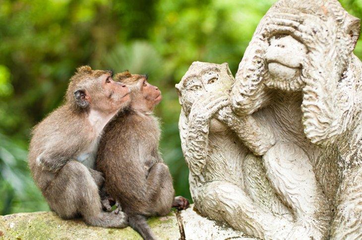 جنگل مقدس میمون، Ubud