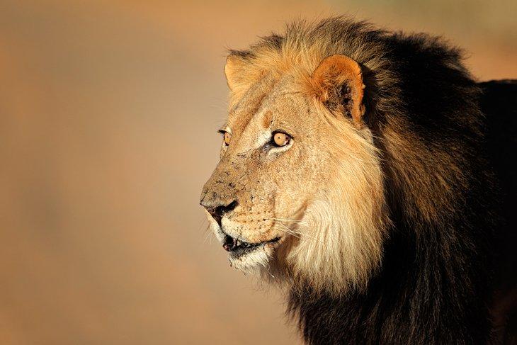 Kgalagadi (Kalahari) Transfrontier Park, South Africa