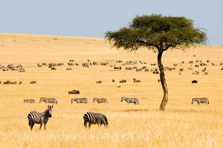 12 TopRated Tourist Attractions in Kenya – Savannah Tourist Attractions Map