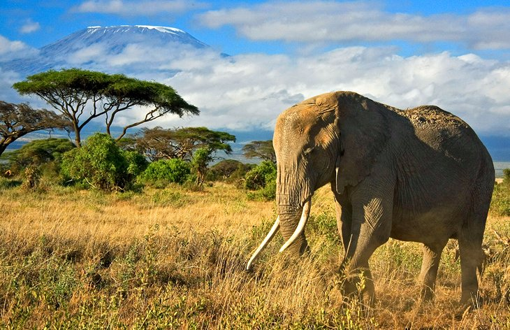 Amboseli National Reserve