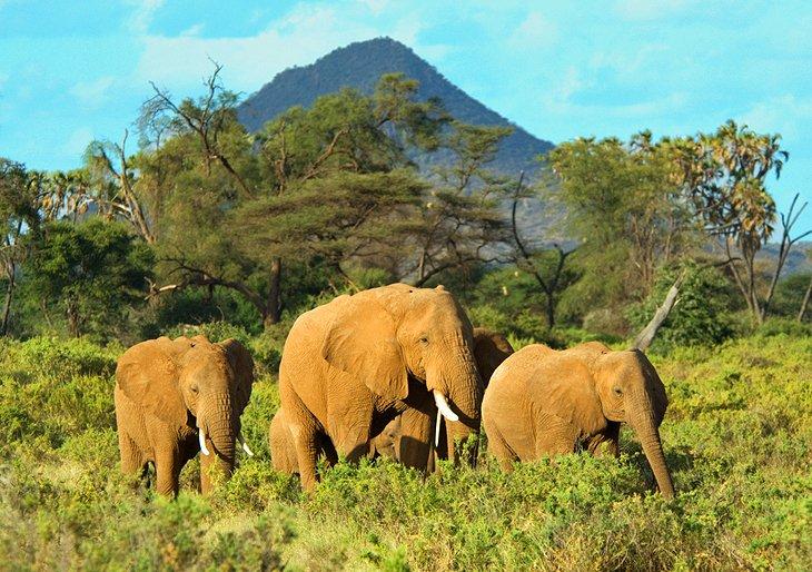 Samburu, Buffalo Springs, and Shaba National Reserves