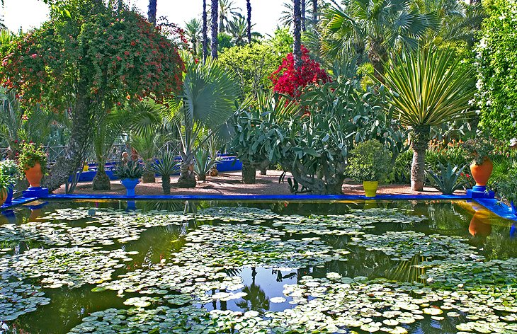 Garden in Marrakesh