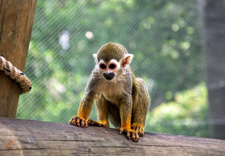 Where can I find the history of zoos in Mexico?