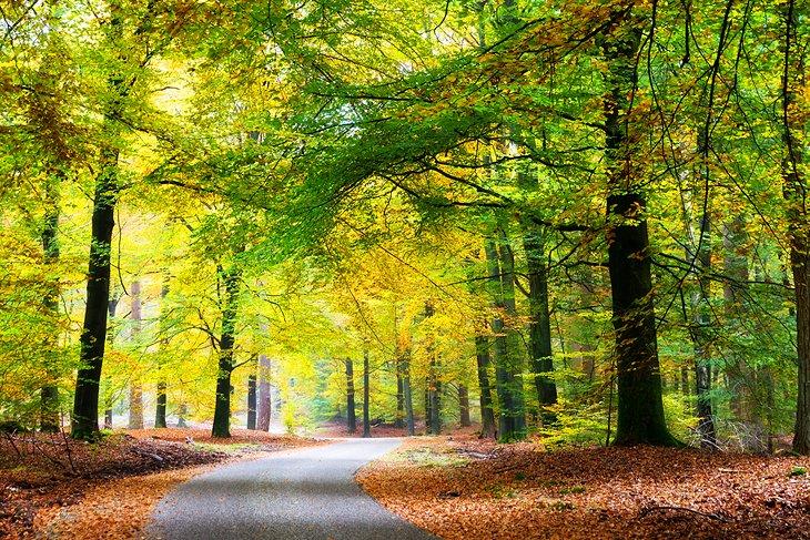 Image result for Hoge Veluwe netherlands