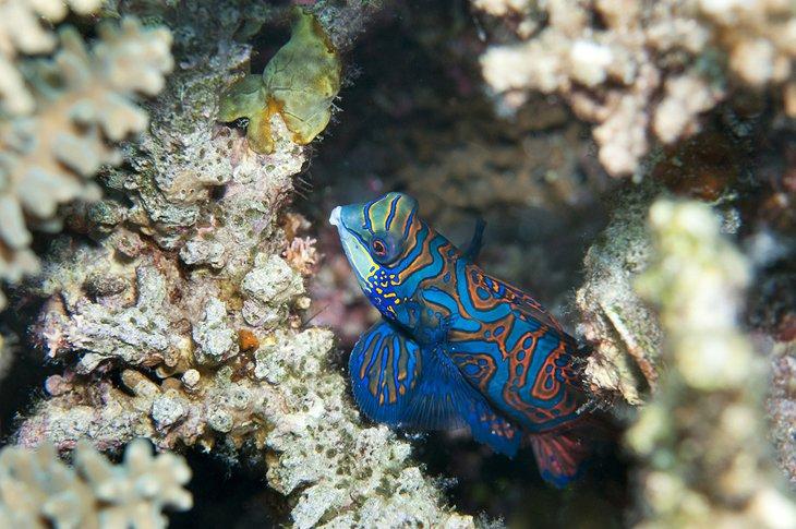 باغ مرجانی کرون فیلیپین