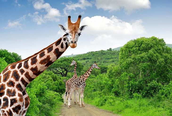 exploring kruger national park a visitor\u0027s guide planetwareflora and fauna
