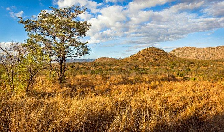 exploring kruger national park a visitor\u0027s guide planetwareKrugerpark Tips.htm #13