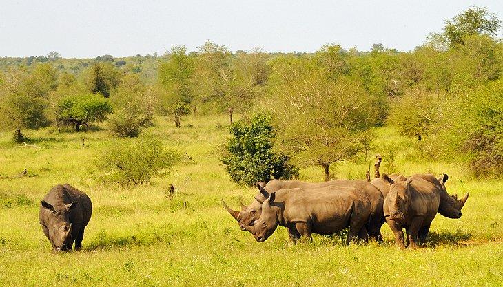 exploring kruger national park a visitor\u0027s guide planetwareSafari Kruger.htm #15
