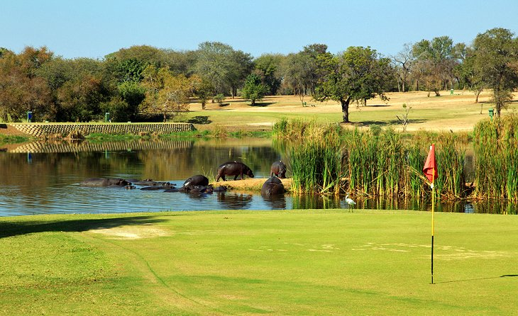 Skukuza Camp Golf Course