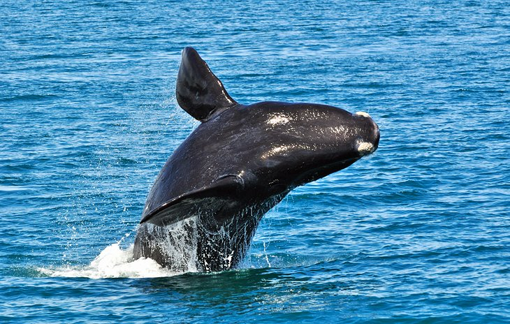Hermanus: Whale Watching and Water Sports