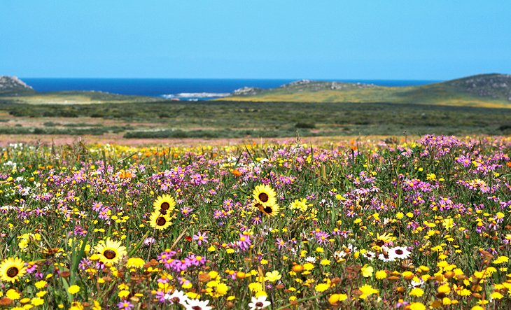 The Wildflowers and Birds of West Coast National Park