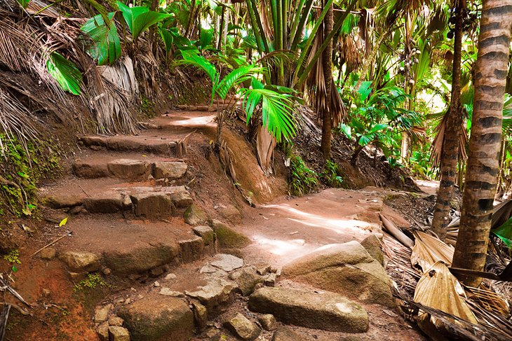 Vallée de Mai National Park, places to visit in Seychelles island