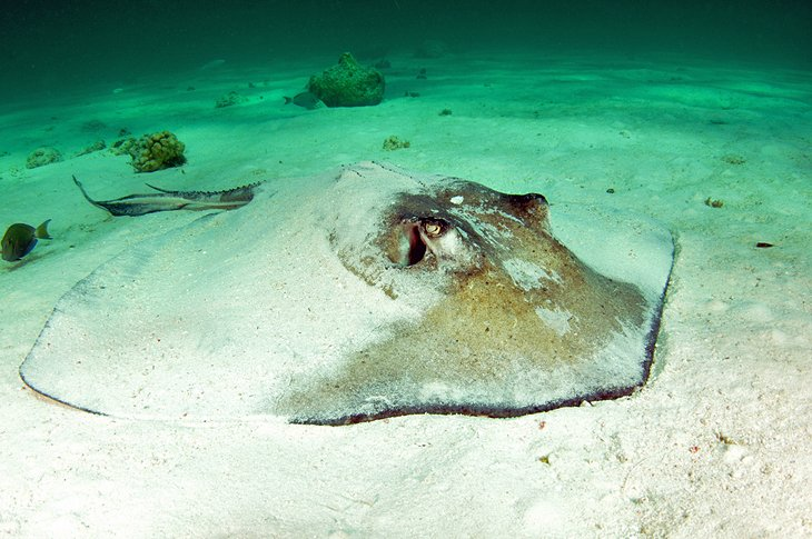 Swim with Stingrays at Gibbs Cay