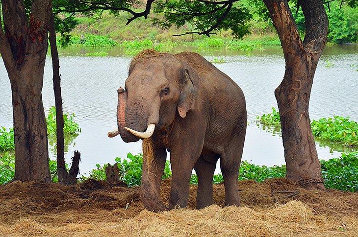 Останки слонов