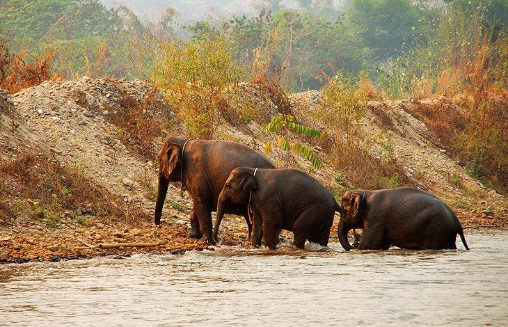 پارک طبیعت فیل