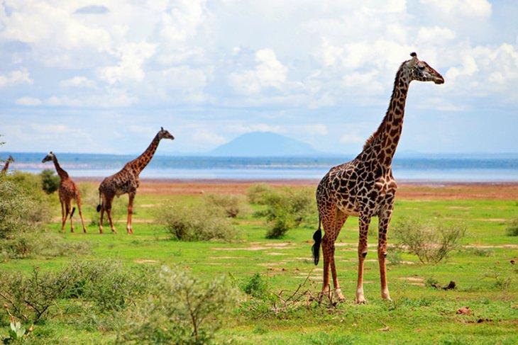 A Manyara-tó Nemzeti Park