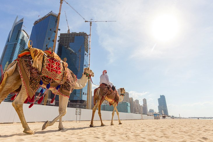 Camel Rides In Dubai 20 Top-Rated Tourist A...