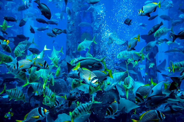 Dubai Aquarium, places to visit in Dubai, best aquarium in the world