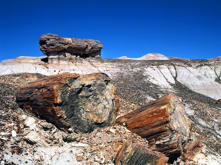Parque Nacional del Bosque Petrificado