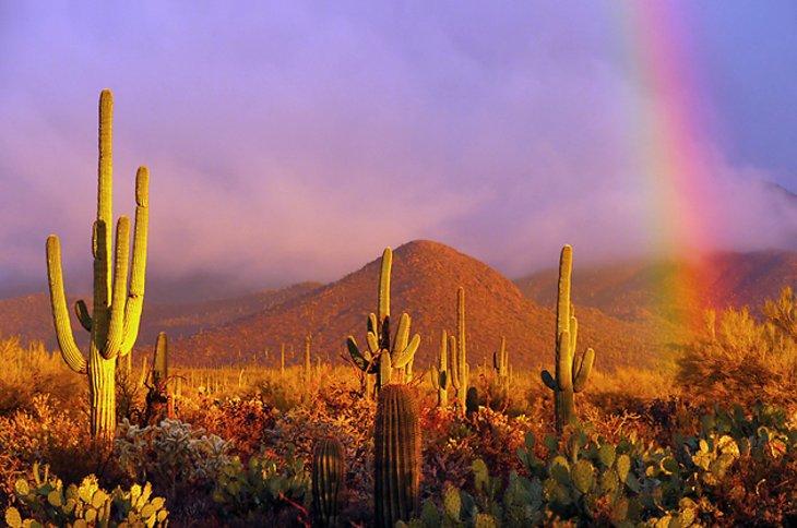 Parque Nacional Saguaro