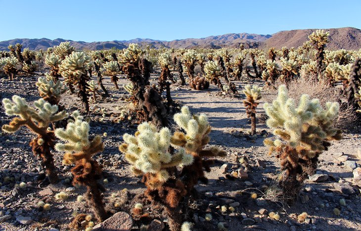 9 Fun Things To Do In Joshua Tree National Park Hikes Sights Activities Planetware