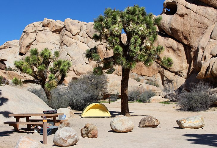 Joshua tree hook up
