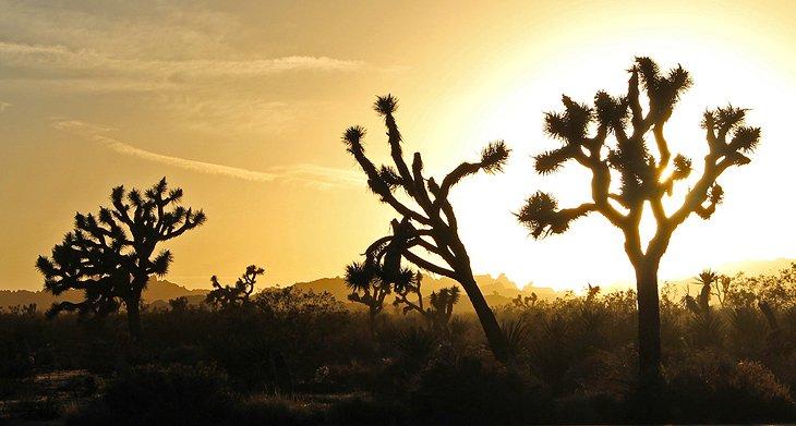 Atardecer en el Parque Nacional Joshua Tree