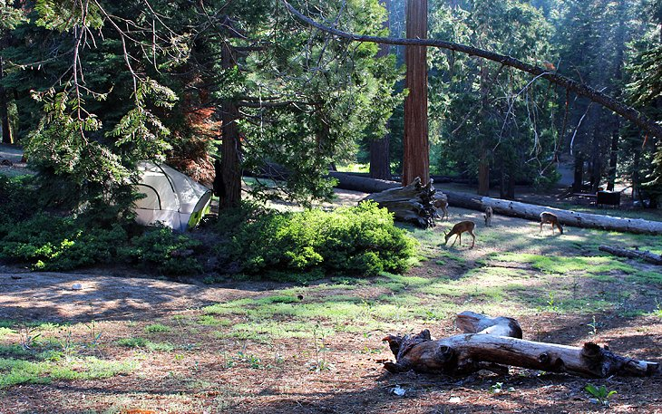 9 Best Campgrounds at Kings Canyon National Park | PlanetWare