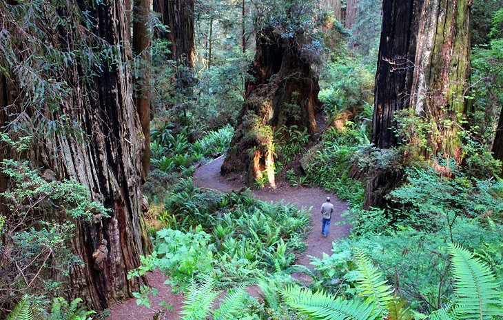 Where to Stay near Redwood National and State Parks