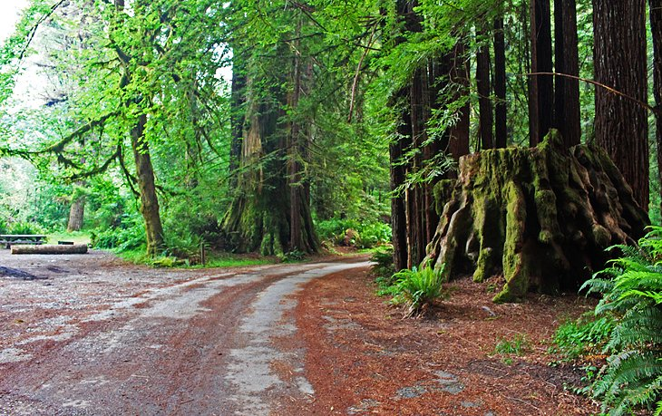 6 Best Campgrounds In Redwood National And State Parks