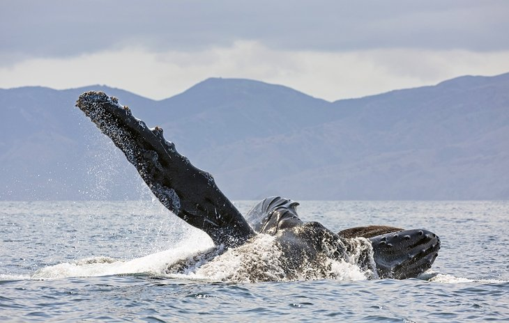 Hop aboard a Whale Watching Cruise