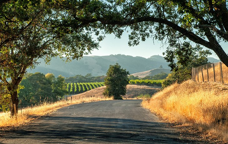 The Rolling Hills of Sonoma County