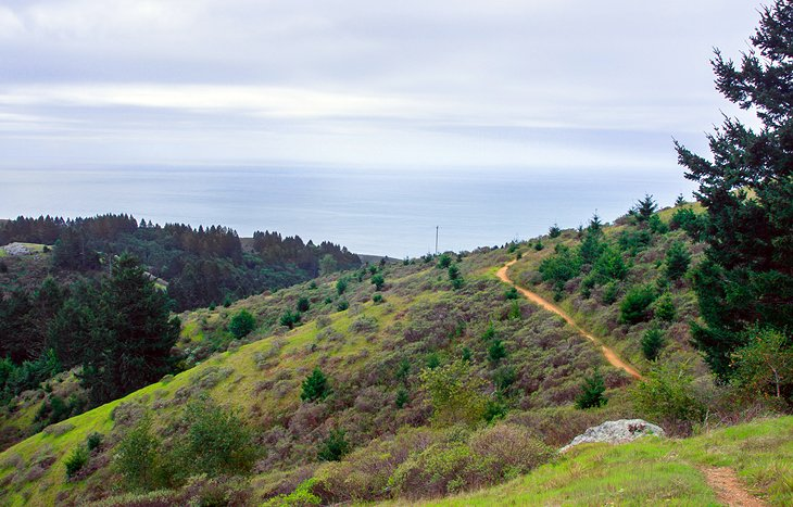 Stinson Beach and Dipsea Trail Hike