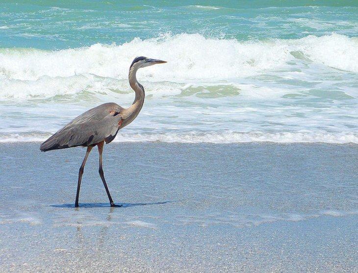 http://www.planetware.com/photos-large/USFL/florida-indian-rocks-beach.jpg
