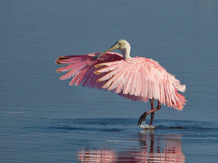 http://www.planetware.com/photos-large/USFL/florida-st-petersburg-sand-key-park-bird.jpg