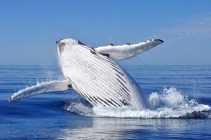 Avistamiento de ballenas en el Santuario Marino Nacional Stellwagen Bank