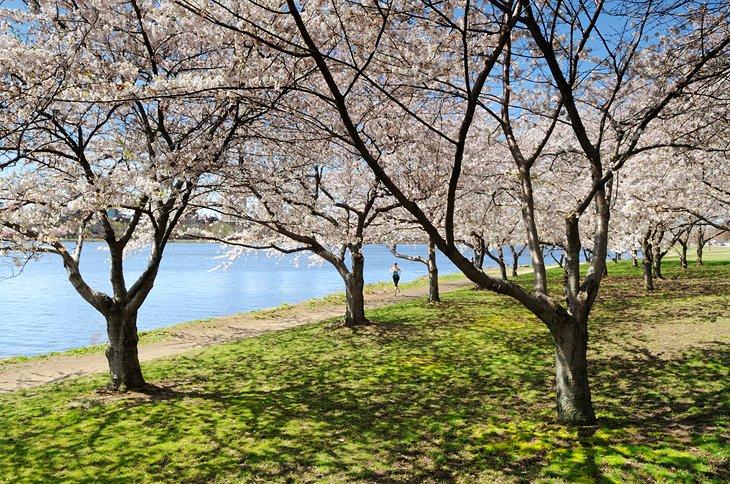 Reserva de Charles River