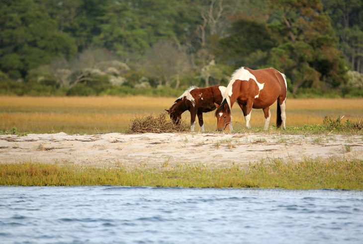 Assateague Island State Park Camp Store