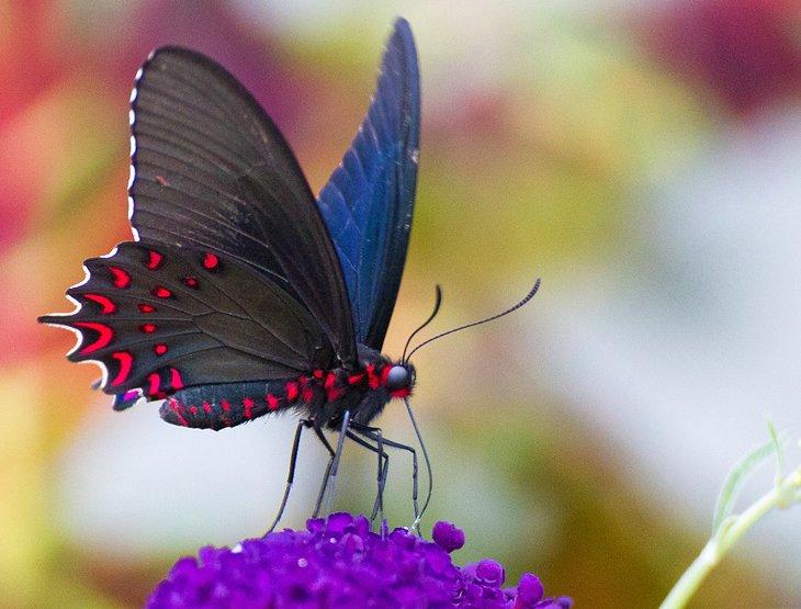 La casa de mariposas y el mundo de insectos originales de la isla Mackinac